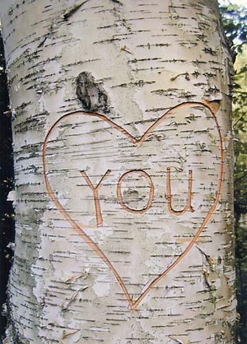 blogpost tree