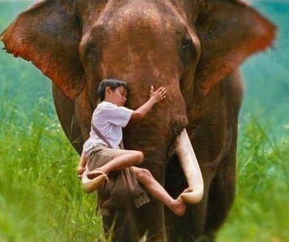 elephant16.jpg
